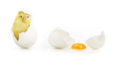 Fototapety Cute little chicken coming out of a white egg
