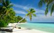 Leinwandbild Motiv einsamer Strand mit Palmen
