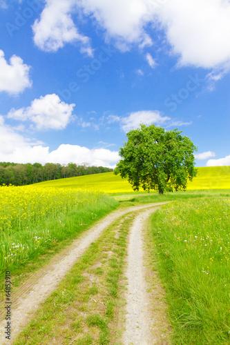 Plexiglas Cultuur Wanderweg in die Natur