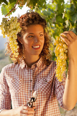woman harvesting grapes under sunset light