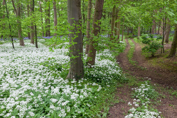 Path through scented wood
