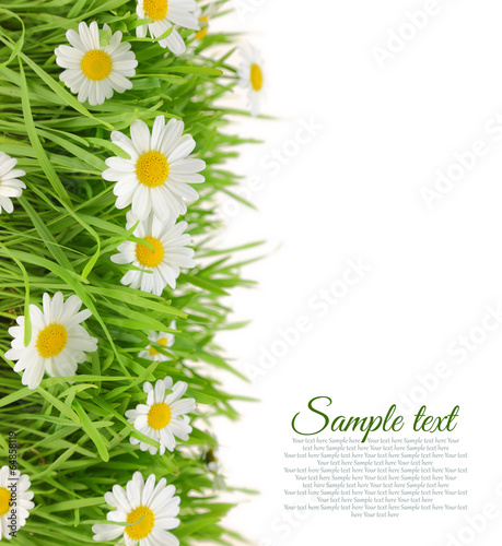 White flowers with fresh grass and copy-space