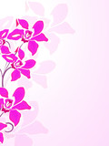 floral,blüte,blume,design,frühling,silhouette,orchidee,natur,