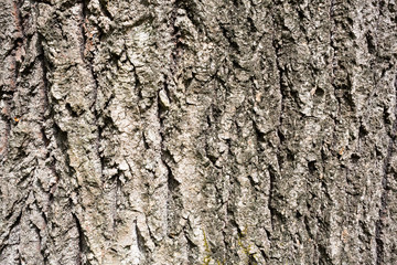 Surface texture of tree bark in the woods