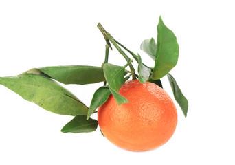 Ripe mandarin with green leaves.