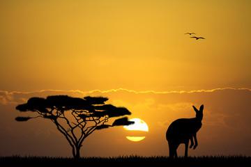 kangaroo in Australian landscape