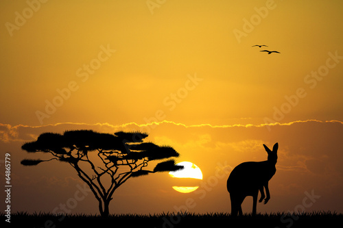kangur-w-australijskim-krajobrazie