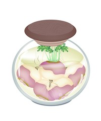 Jar of Pickled Turnip with Malt Vinegar