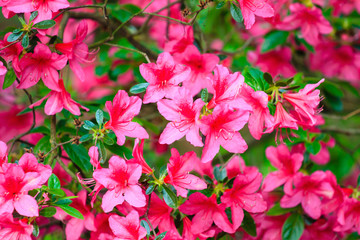 Pink Flowers Background Photo