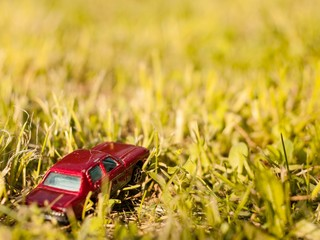 Car in the grass