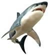 Great White Shark Body - 64869751