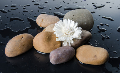 Composition of pebbles with a white flower