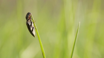 Beetle on blade of grass