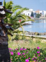 Punta de Moral, Isla Canela, Andalusia, Spain