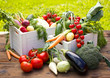 Fresh and organic vegetables in the garden