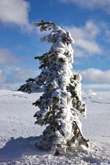 Einsamer Baum in Finnisch-Lappland