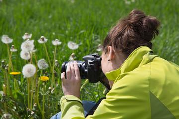 Hobby: junge Frau fotografiert im Sommer Löwenzahn