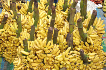 A large bunch of bananas
