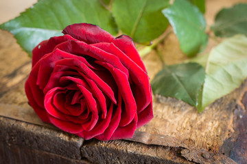 rote Rose auf Holz