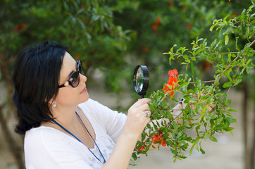 Botanist checking the growth of pomegranate flowers
