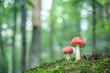 Leinwandbild Motiv mushroom