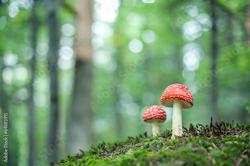 mushroom - 64883915