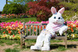 canvas print picture - Easter bunny on bench and tulips