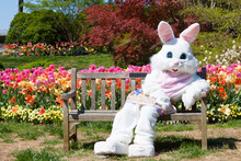 """Постер, картина, фотообои """"Easter bunny on bench and tulips"""""""