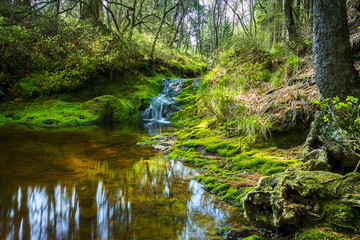 Hidden Pont with waterfall cascades at the hautes fagnes