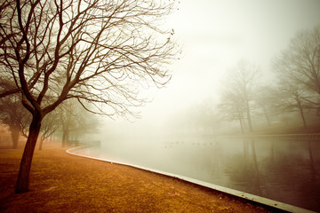 Foggy morning pond with tree