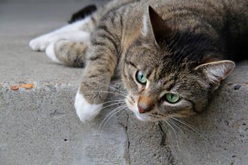 Tigerkatze auf Treppenstufe