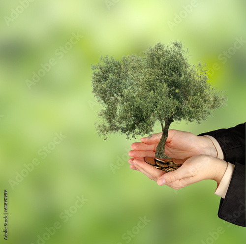 Tuinposter Olijfboom Olive tree in palms as a gift