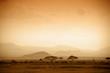 Leinwandbild Motiv african savannah at sunrise