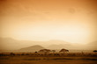 Leinwanddruck Bild - african savannah at sunrise