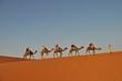 Camel caravan in Merzouga desert, Morocco - 64893966