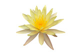 Beautiful single lotus with clipping path.