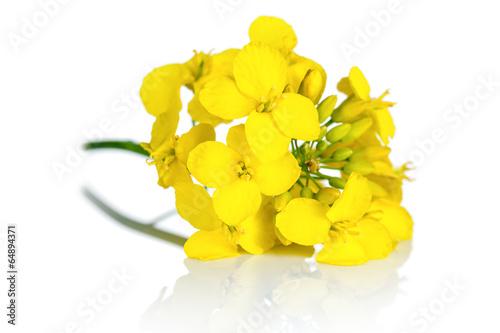 Foto op Canvas Bloemenwinkel Rapeseed Flower