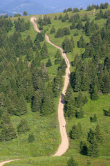 Fir Woods Of Kopaonik National Park, Serbia