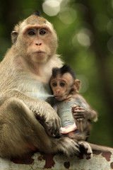 Family of monkeys