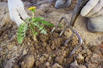 Hand farmer remove weeds from the soil