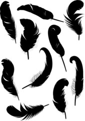 ten curled isolated black feathers