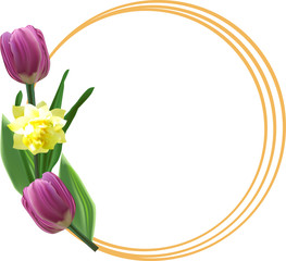 two tulips and narcissus isolated on white