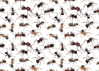 seamless background from brown ants