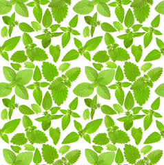 seamless background with fresh mint leaves