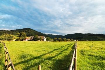 Weide im Schwarzwald