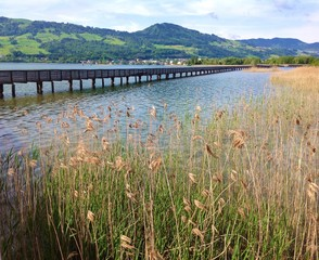 landscape in Rapperswil