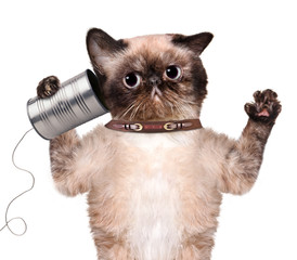 Cat on the phone with a can