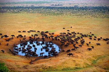 Buffalo at the source © kubikactive
