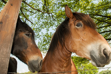 Two Horses in the Shade