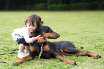 Cute toddler with doberman